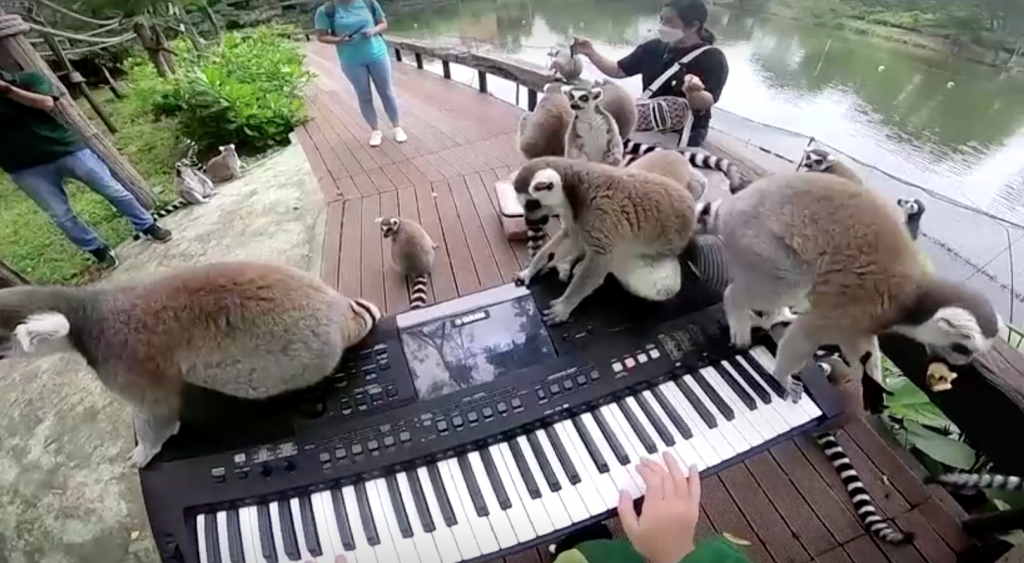 В Таиланде волонтёры дают концерты для зверей