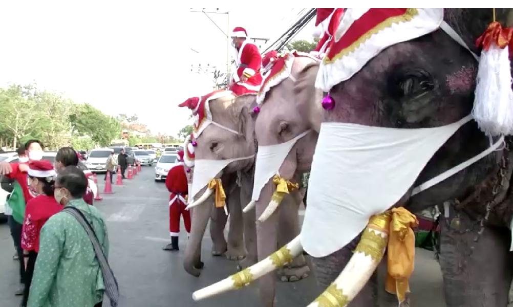 В Таиланде слоны переоделись Санта-Клаусами и отправились в школы
