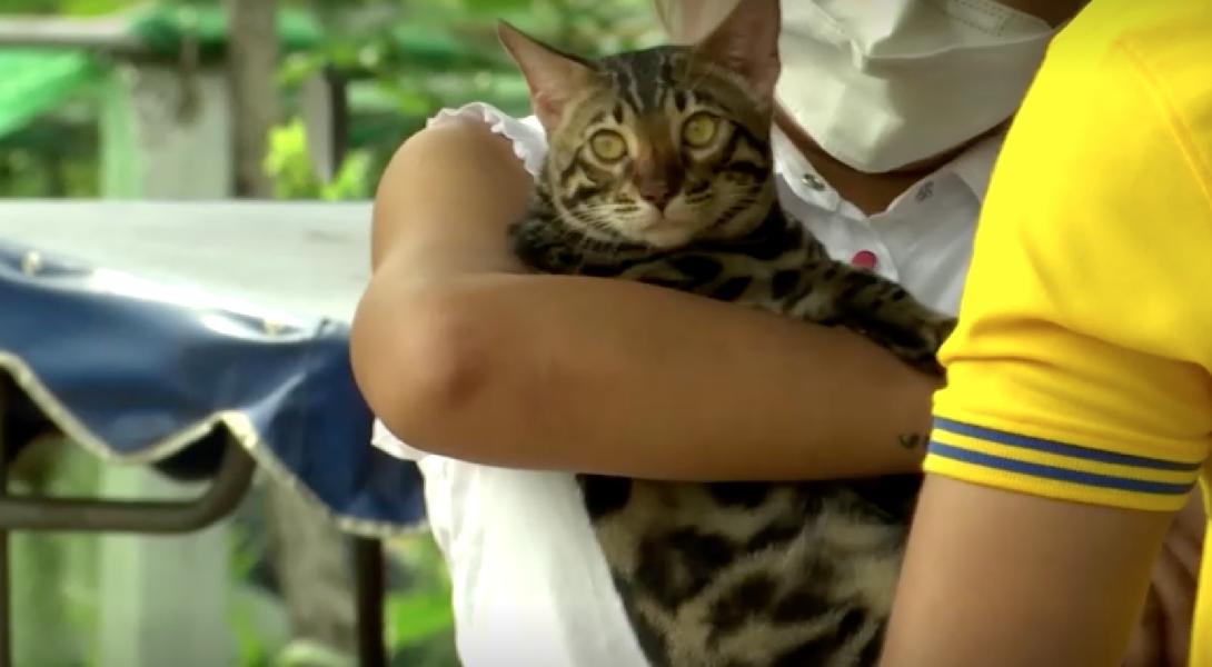 В Таиланде 6 котов ушли с молотка за 3 тысячи долларов на аукционе, организованном полицией