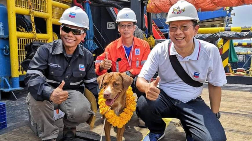 В заливе Таиланда спасли собаку, которая находилась в 200 километрах от берега