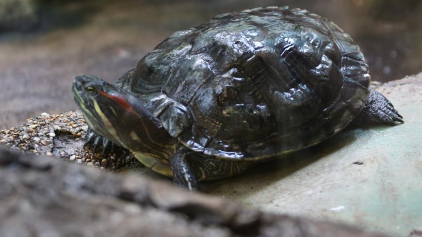 Черепахи в Таиланде начали активно размножаться в отсутствие туристов