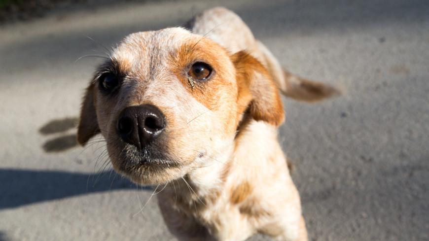 В Камбодже собака спасла заблудившихся в джунглях туристов
