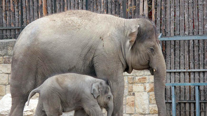 В Таиланде появился музей с игровой площадкой для слонов