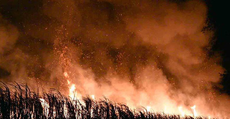 Сжигание сахарного тростника погрузило половину Таиланда и Паттайю в сумеречную мглу