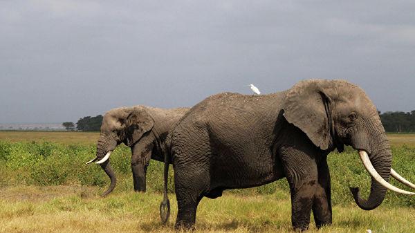 Таиланд впервые с 2009 года разрешил экспорт слонов