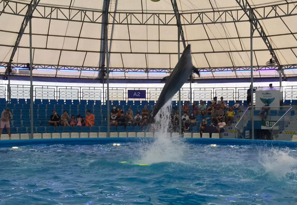 В Паттайе будут проводить дельфинотерапию в Pattaya Dolphinarium