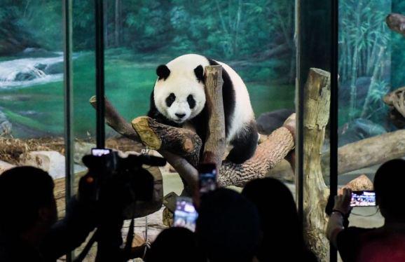 Китайские эксперты взялись за расследование смерти известной панды в Таиланде