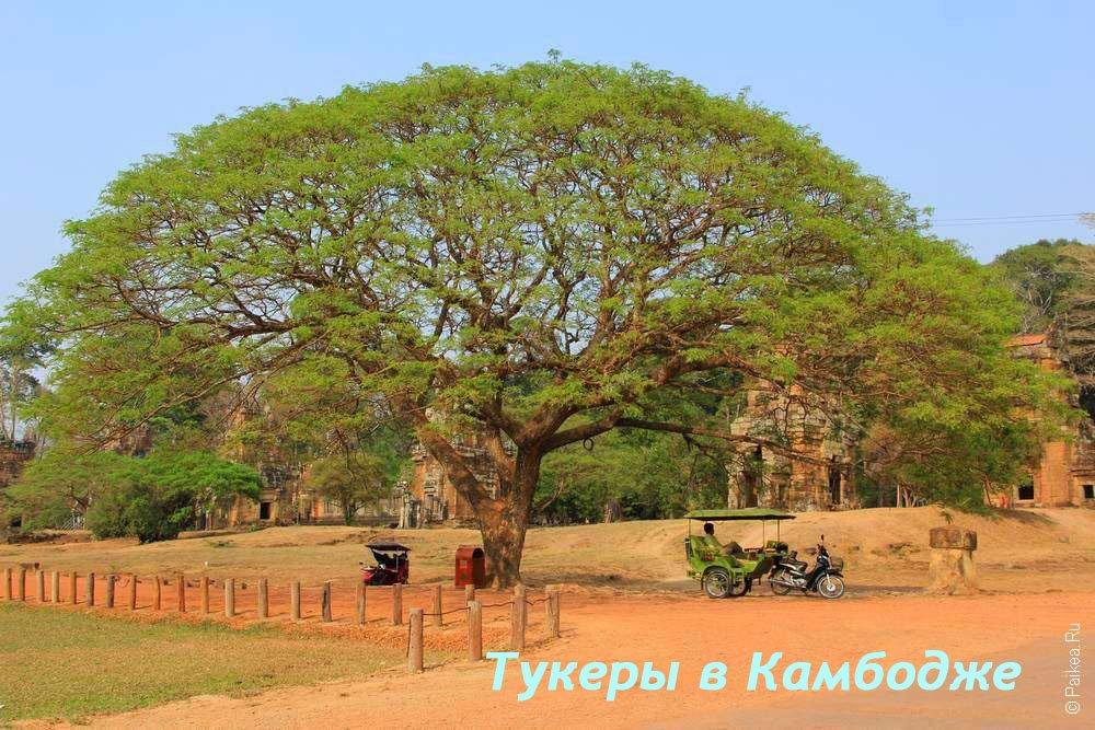 Тук-тук в Камбодже: где найти тукера в Сием Рипе для экскурсии в Ангкор