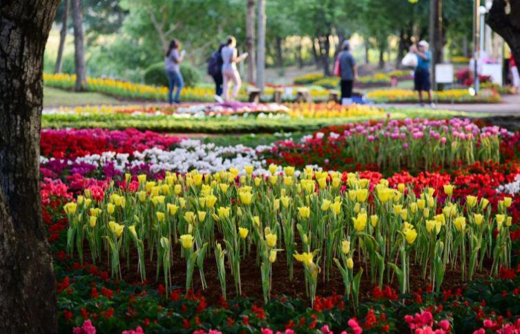 Более 300 тысяч человек посетили международный фестиваль цветов в Таиланде