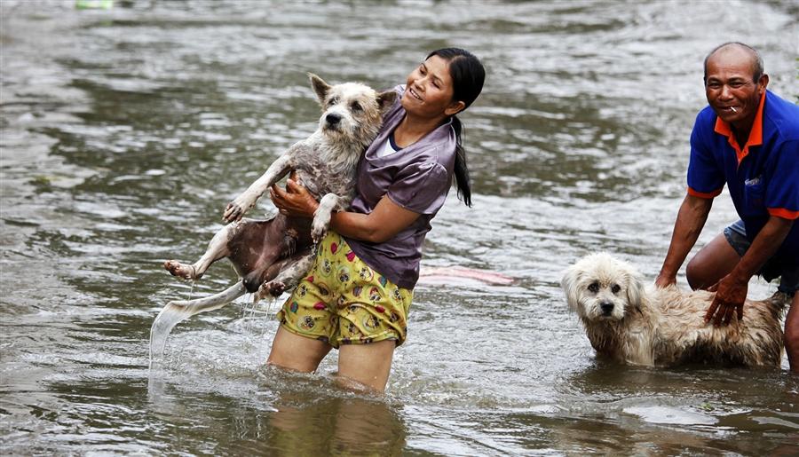 Народ Таиланда не поддержал идею о плате за регистрацию домашних животных
