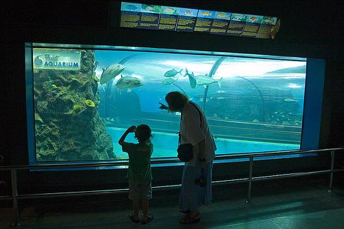 Приглашает пхукетский океанариум!