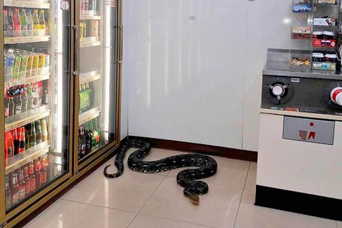 Нежелательный посетитель 7-Eleven в Сираче в провинции Чонбури