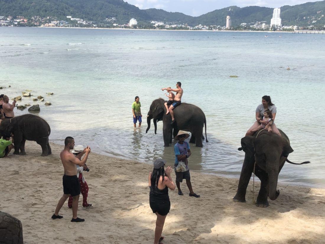 """Жалобы по поводу """"пыток слонов"""" проверяют на Пхукете"""