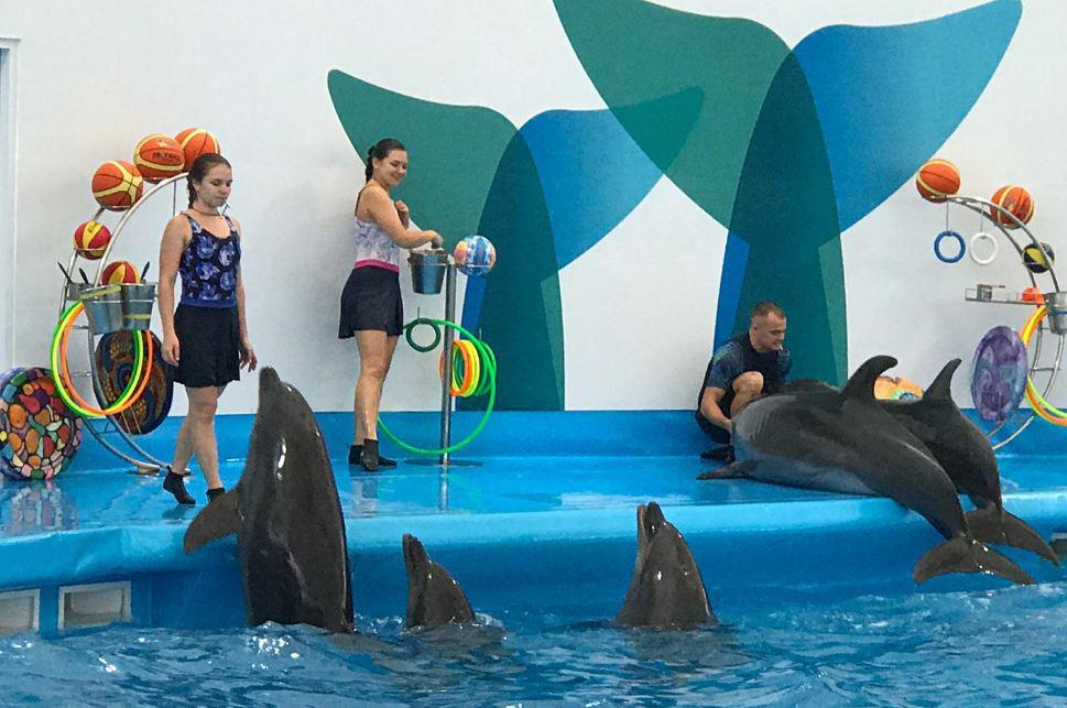 Шоу дельфинов и морских котиков в новом дельфинарии в Паттайе