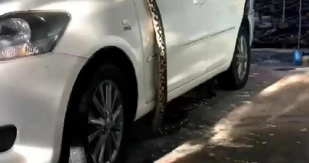 Это Таиланд, детка: подходишь к своей машине, а в ней отдыхает 4-х метровый питон