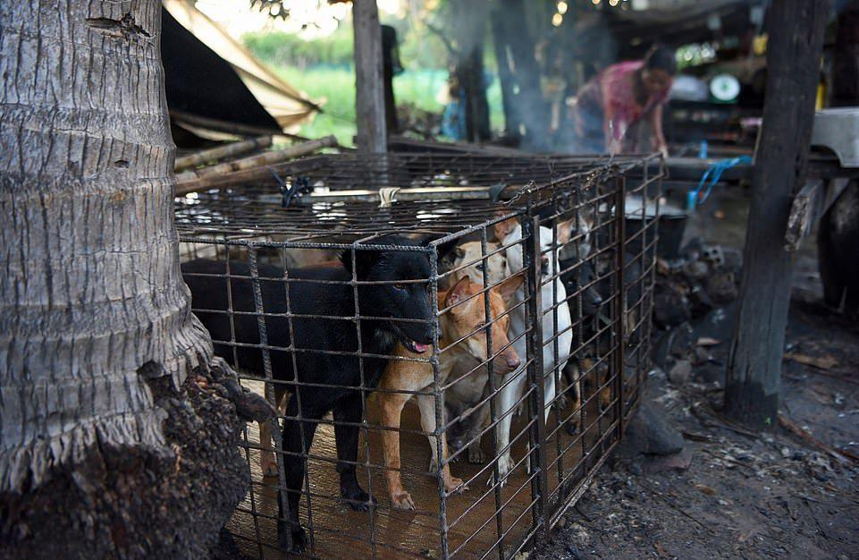 Камбоджа сделала шаг к отказу от мяса собак, несмотря на туризм