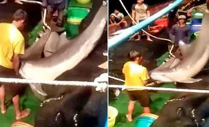 Два тайца признались, что незаконно убили около 30 дельфинов