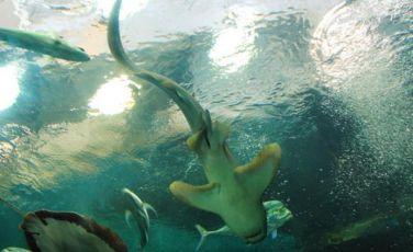 Phuket Океанариум (Phuket Aquarium)