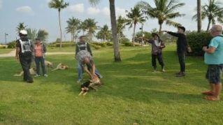 Строители из Камбоджи охотятся на бродячих собак в Паттайе