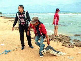 На пляже Пратамнак обнаружен труп молодого дельфина