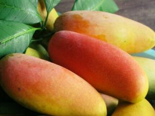 Тайские учёные выяснили, что манго защищает от рака и сердечных болезней