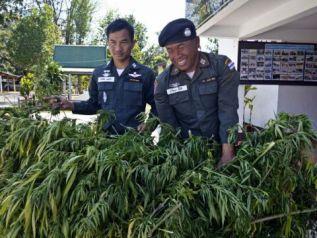 Таиланд легализовал использование травки в медицинских целях