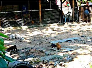 Храм в Паттайе стал приютом для сотен брошенных котов и собак