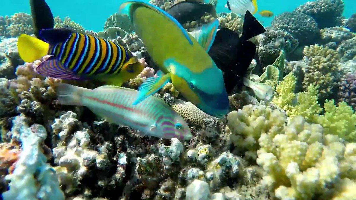 SRF: моря Таиланда оживают благодаря отсутствию туристов