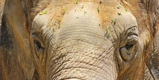 Дикий слон прилёг на автомобиль с туристами в Таиланде