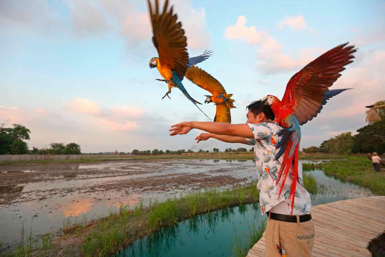 Первый фестиваль в Таиланда «Птицы в свободном полете»