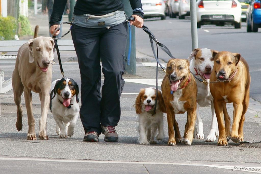 Завести собаку в Израиле