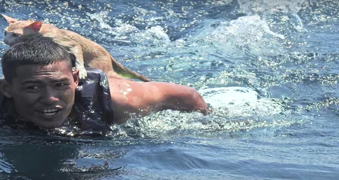 «Морские котики» спасли терпящих бедствие котиков