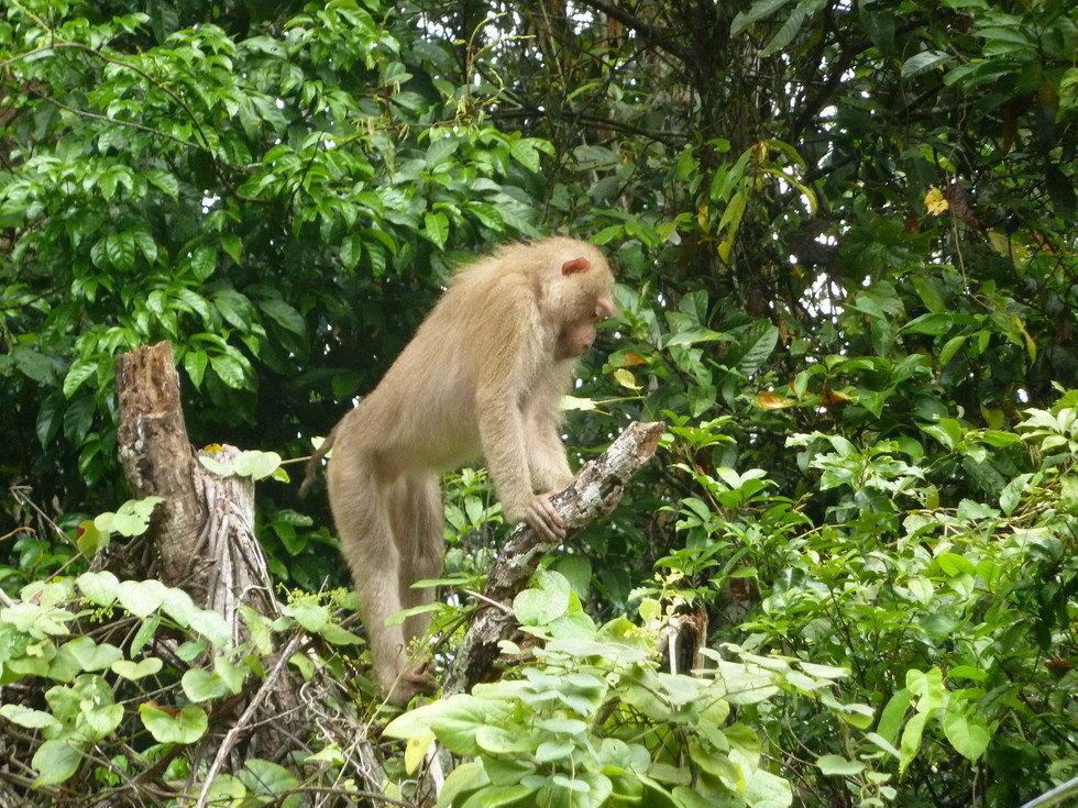 Национальный парк в Таиланде будет возвращать мусор туристам по почте