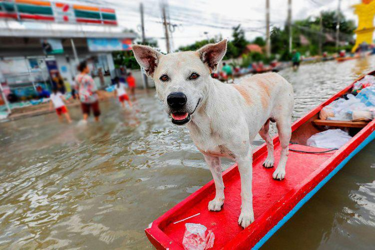 Тайцы возмущены бездействием властей в помощи пострадавшим от тайфуна