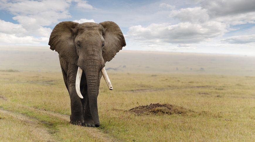 Слоны в восторге: в Таиланде начали проводить необычную терапию для животных