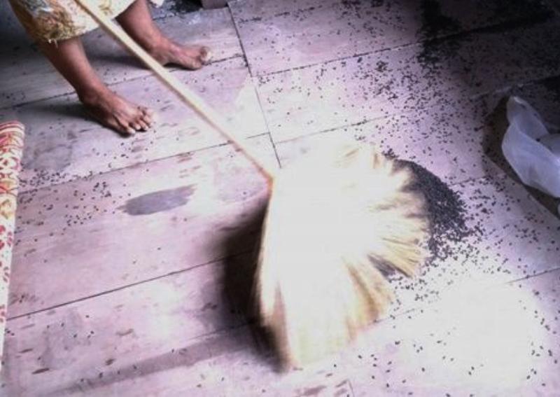 Нашествие насекомых выгоняют жителей Таиланда из собственных домов