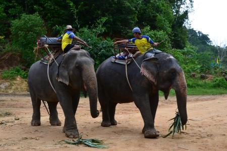 Правительство Таиланда рассчитывает увеличить доходы от туризма на 10% в следующем году