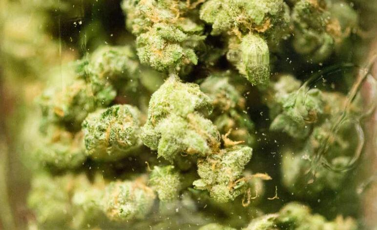 """В Таиланде накрыли целый """"огород"""" незаконной марихуаны"""
