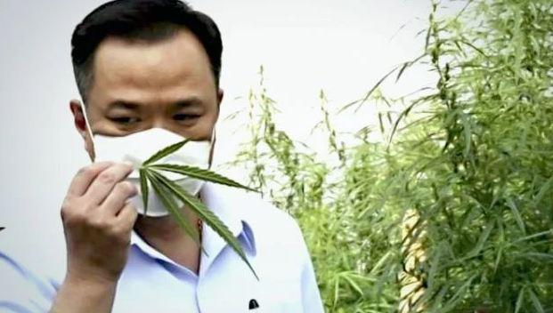 """Каннабис возведут в ранг """"основного лекарства"""" в Таиланде"""