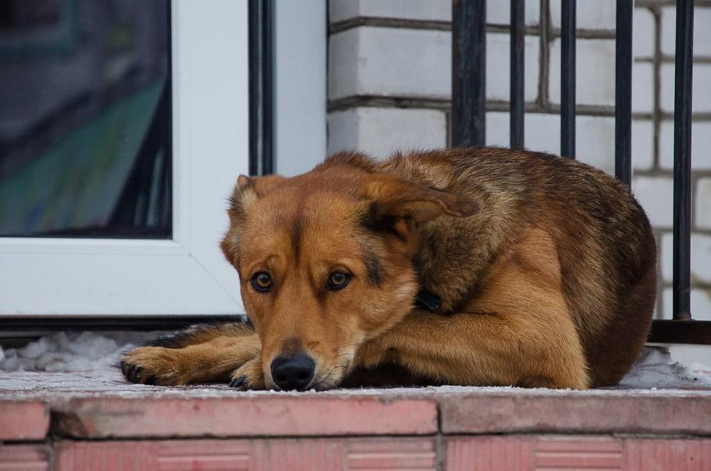 Преданный пес два дня отказывался покидать умершего хозяина