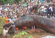 Unknown Monster Dug Up In Cambodia?