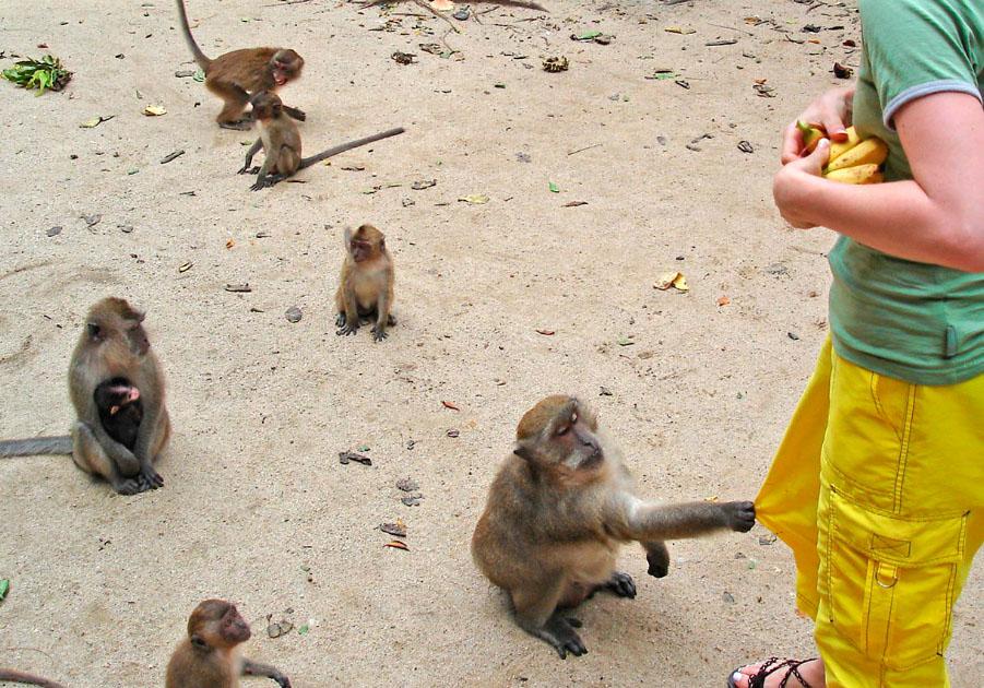 Ко-Тханан превратится в первый на Пхукете обезьяний островок