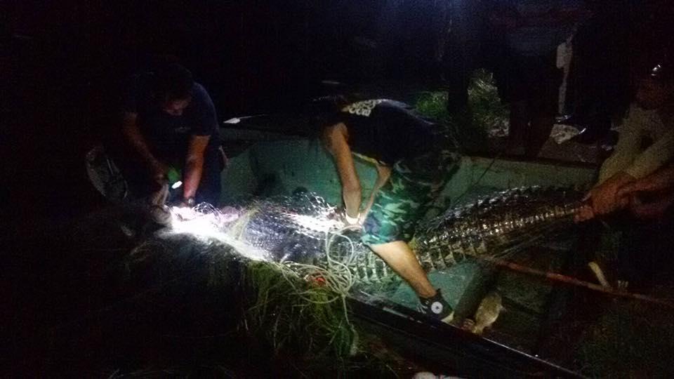 Крокодил пойман , всем спасибо)