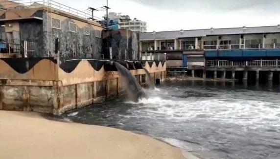 Чёрная вода заполонила Сиамский залив - очередная эко-катастрофа?