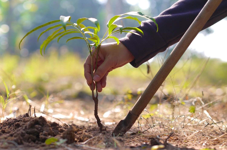 Церемония посадки деревьев в честь годовщины Победы прошла в Камбодже