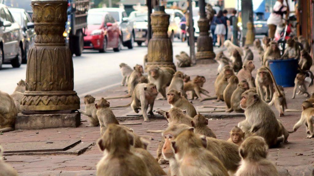 Началась битва обезумевших обезьян за передел туристического рынка: опубликовано видео