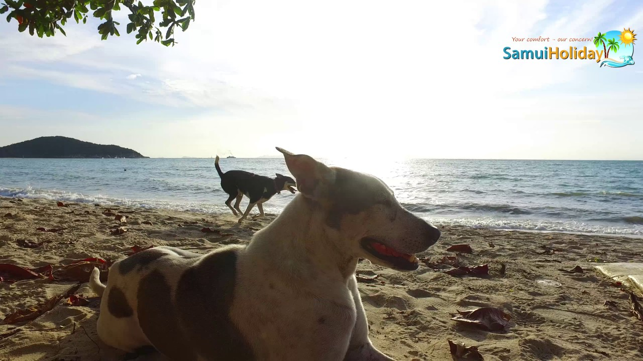 Lipa Noi beach, Koh Samui, Thailand - Relax 4K video - DJI Osmo