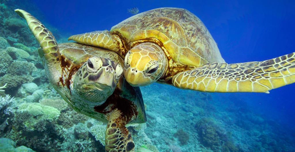 С начала июля на Пхукете больше 40 особей черепах погибли или ранены