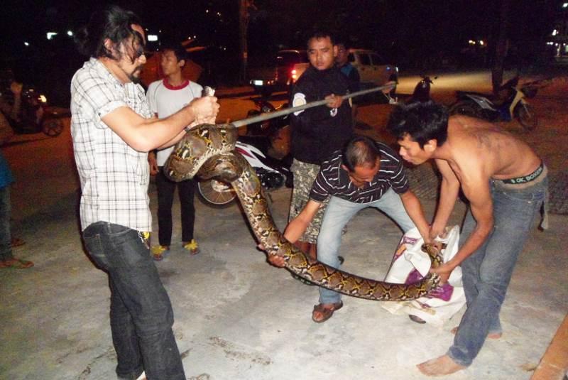 Насыщенные выходные выдались у островных змееловов