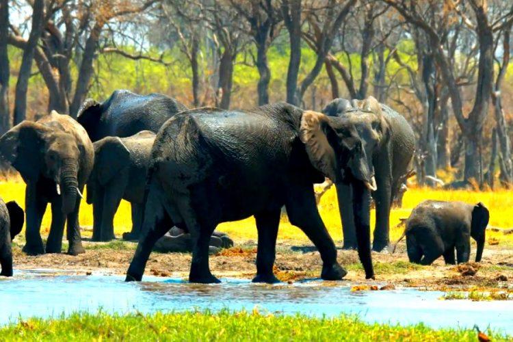 Таиланд предлагает Zoom-конференции со слонами